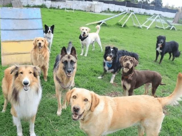 Mejores Residencias Caninas de Málaga